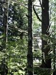 John Wayne Trail to Twin Falls